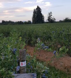 Blueberry Haven Kelowna