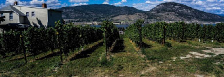 Monster Vineyards