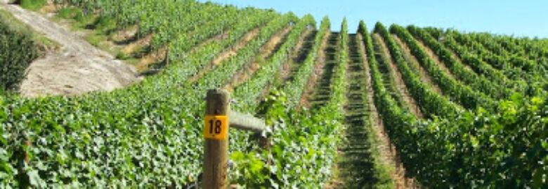 Howling Bluff Estate Winery