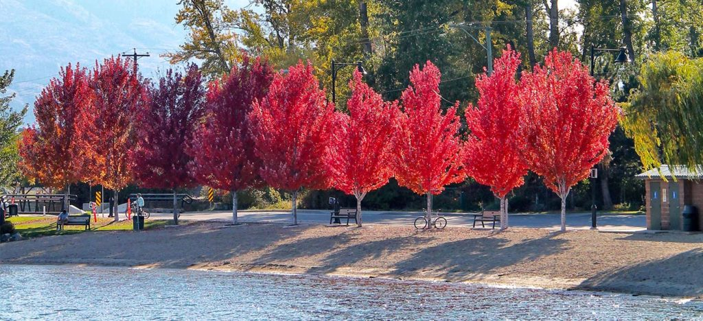 The Best Places To See The Fall Foliage In West Kelowna